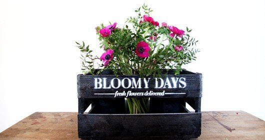 bloomy-days-produkt