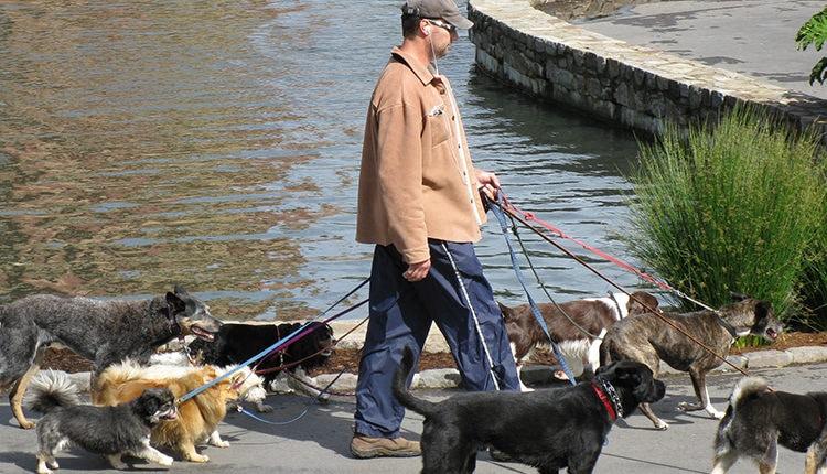 dogwalker-kleinunternehmer
