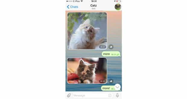 10-chatbots-catzbot