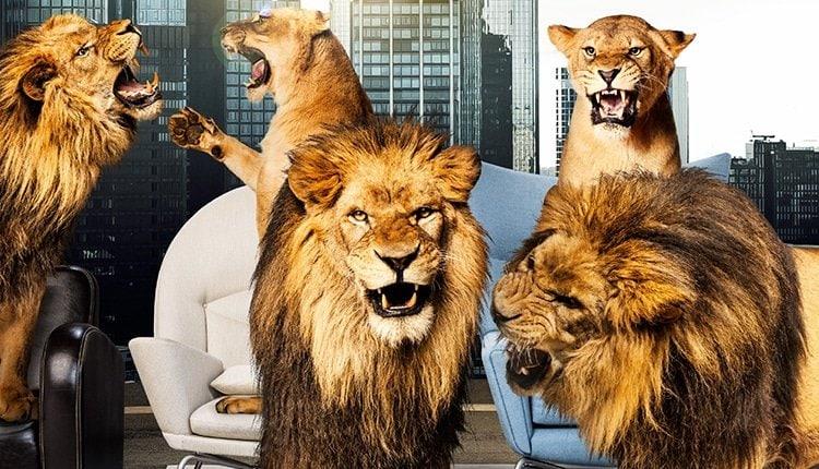 Die Höhle der Löwen Open Pitch Call