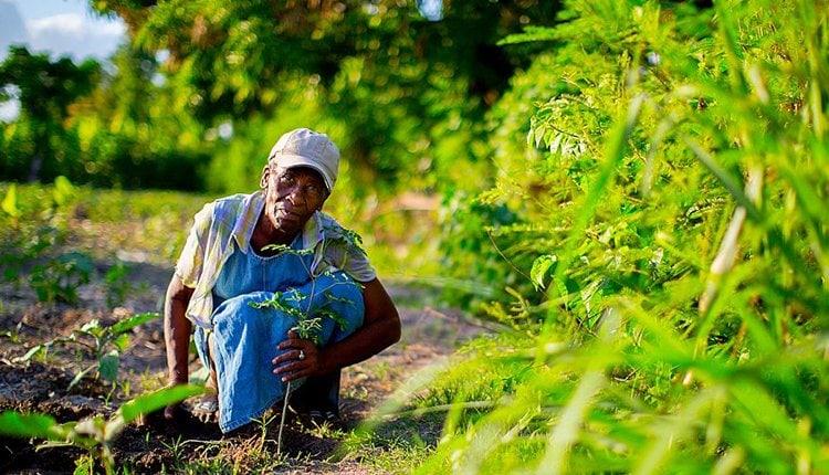 b-n-tree-gruenderstory-startup-nachhaltig-baum-pflanzen