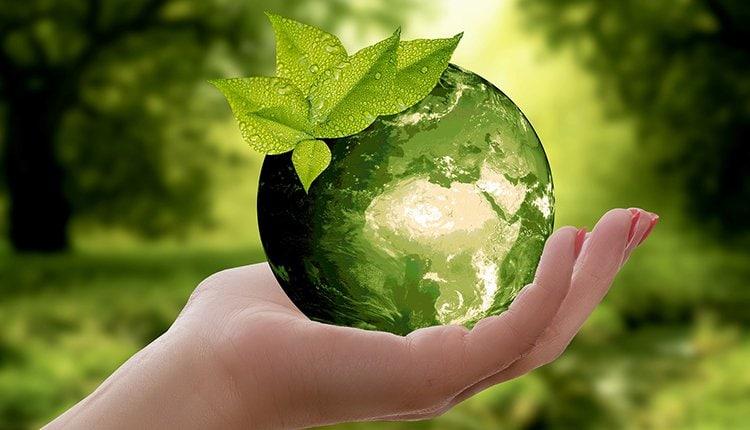 gruene-startups-umwelt-nachhaltigkeit