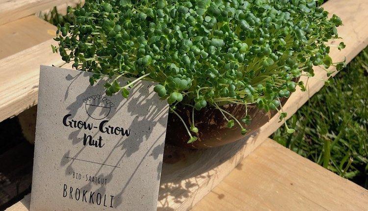 grow-grow-nut-startup-gruenderstory-produkt