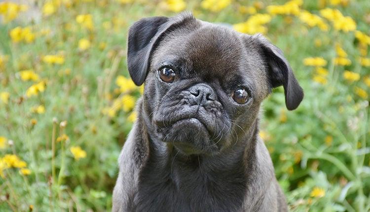 hundeschule-eroeffnen-selbststaendig-machen-als-hundetrainer