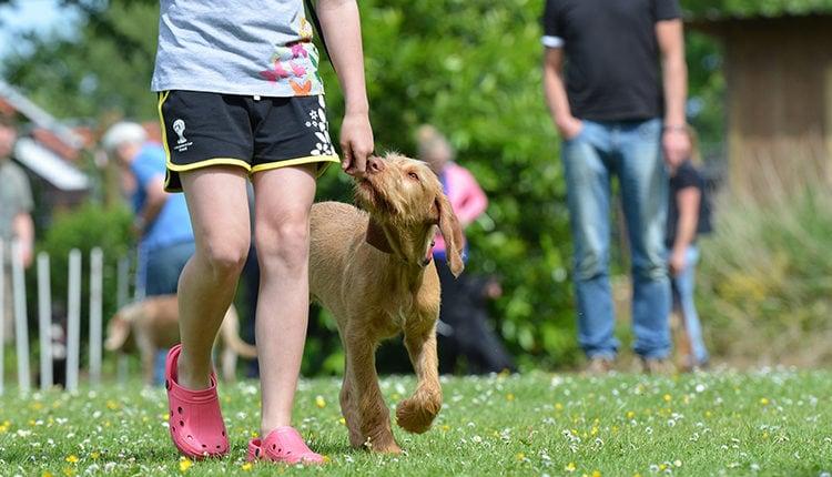 hundeschule-eroeffnen-selbststaendig-machen-als-hundetrainer-training