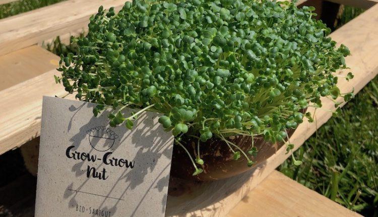 05_Grow-Grow_Nut_Brokkoli(1)